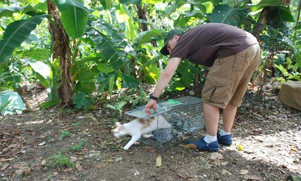 Stray Cat Solutions Jamaica
